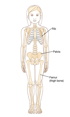 Outline of child showing skeleton.